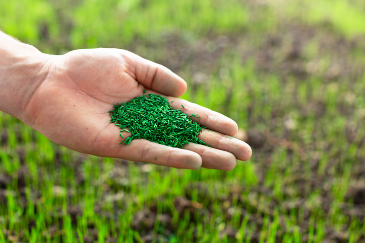 person holding grass seed