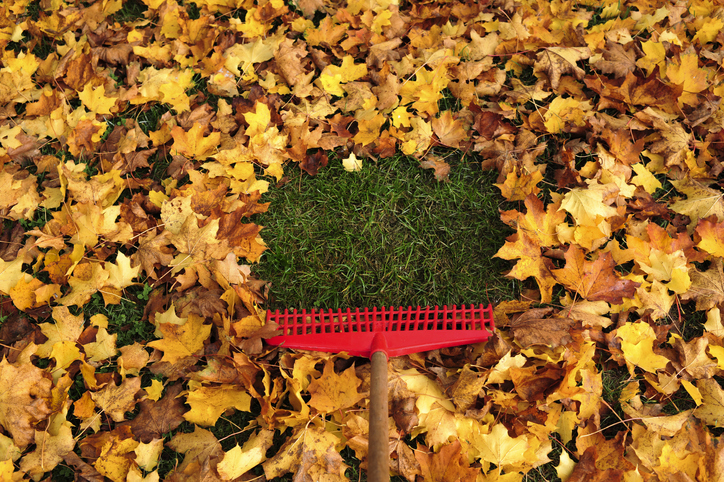 How To Get Your Lawn Ready For The Cooler Weather 4